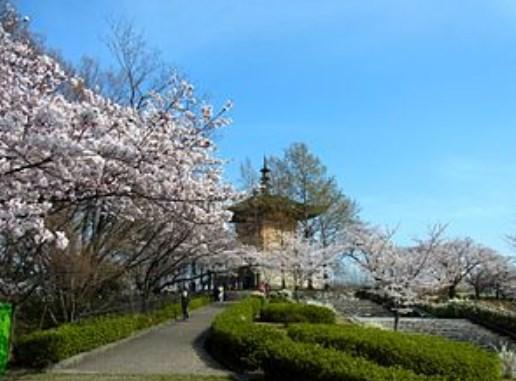 平和公園,花見,見頃,場所取り,駐車場,トイレ,屋台,営業時間