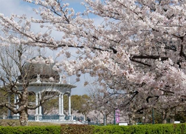 鶴舞公園,花見,見頃,ライトアップ,駐車場,トイレ,屋台,営業時間