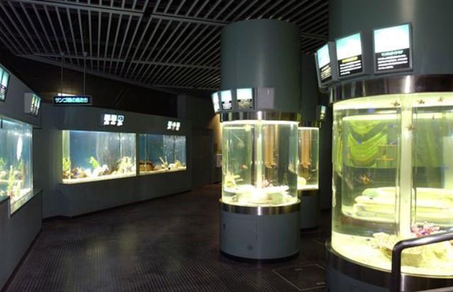 サンピアザ水族館,混雑状況,夏休み,盆休み,アクセス,駐車場