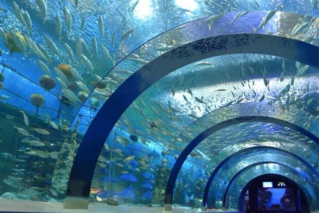 青森県営浅虫水族館,混雑状況,夏休み,盆休み,アクセス,駐車場