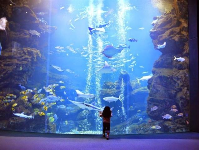 京都水族館,混雑状況,夏休み,盆休み,アクセス,駐車場