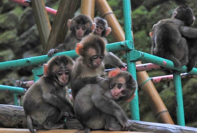 高崎山自然動物園,混雑状況,夏休み,盆休み,アクセス,駐車場