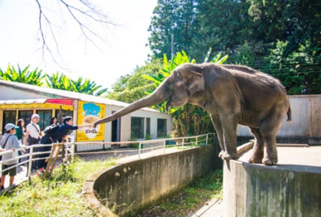 宇都宮動物園,混雑状況,夏休み,盆休み,アクセス,駐車場