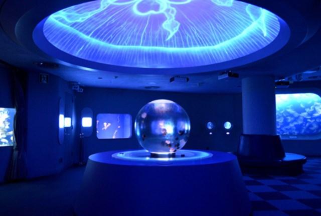 新江ノ島水族館,混雑状況,夏休み,盆休み,アクセス,駐車場