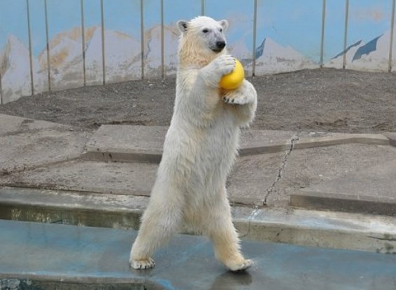 釧路市動物園,混雑状況,夏休み,盆休み,アクセス,駐車場