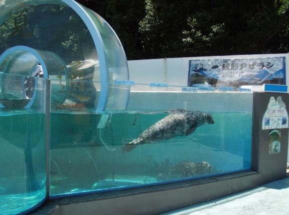 新屋島水族館,混雑状況,夏休み,盆休み,アクセス,駐車場