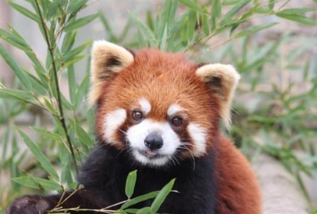 長野市茶臼山動物園,混雑状況,夏休み,盆休み,アクセス,駐車場