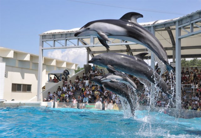 新潟市水族館マリンピア日本海,混雑状況,夏休み,盆休み,アクセス,駐車場