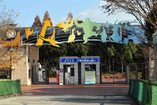 千葉市動物公園,混雑状況,夏休み,盆休み,アクセス,駐車場