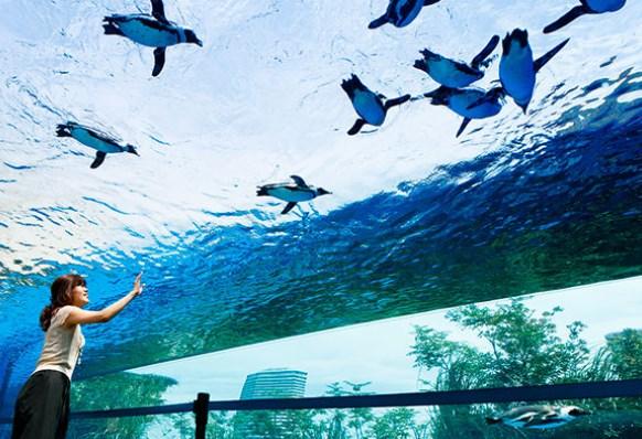 サンシャイン水族館,混雑状況,夏休み,盆休み,アクセス,駐車場