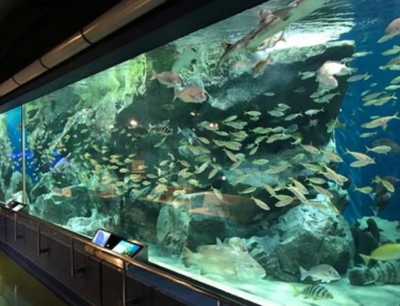 碧南海浜水族館,混雑状況,夏休み,盆休み,アクセス,駐車場