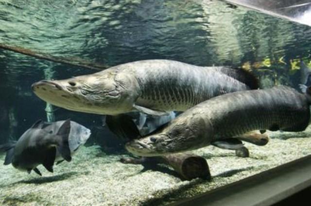 世界淡水魚園水族館 アクア・トト ぎふ,混雑状況,夏休み,盆休み,アクセス,駐車場