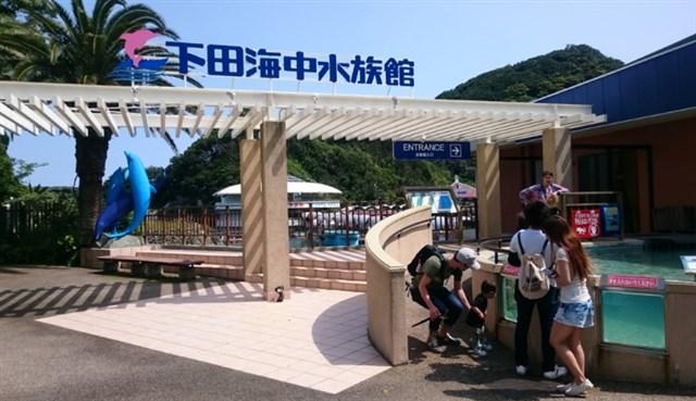 下田海中水族館,混雑状況,夏休み,盆休み,アクセス,駐車場