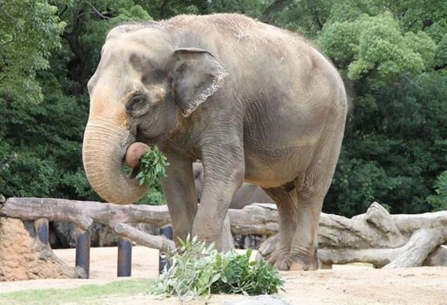 天王寺動物園,混雑状況,夏休み,盆休み,アクセス,駐車場