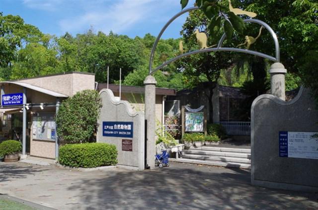 江戸川区自然動物園,混雑状況,夏休み,盆休み,アクセス,駐車場