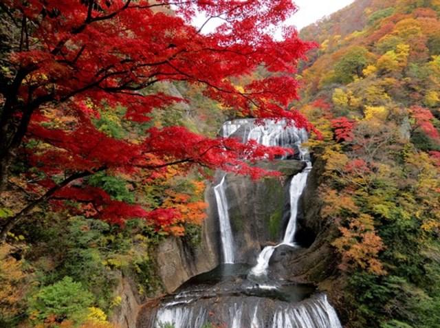 袋田の滝,紅葉,名所,見頃,見ごろ,時期,人気,ランキング,駐車場,混雑