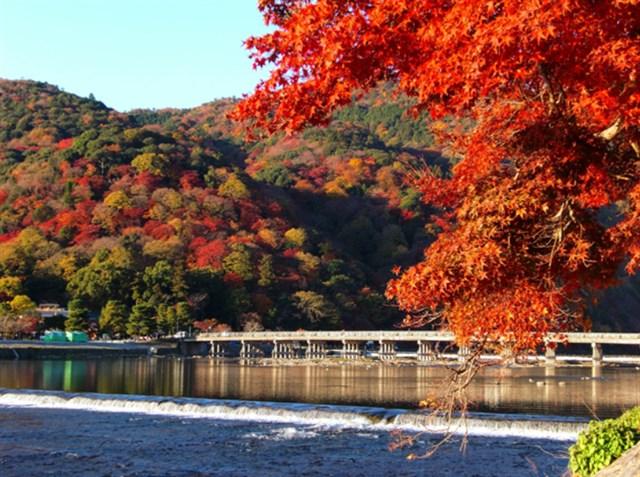 京都嵐山,紅葉,名所,見頃,見ごろ,時期,人気,ランキング,駐車場,混雑