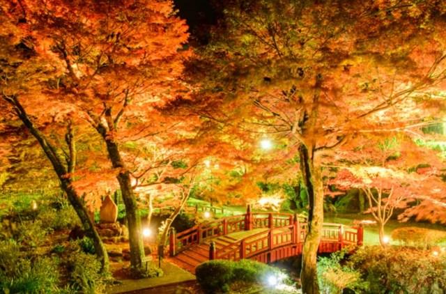 熱海梅園,紅葉,名所,見頃,見ごろ,時期,人気,ランキング,駐車場,混雑