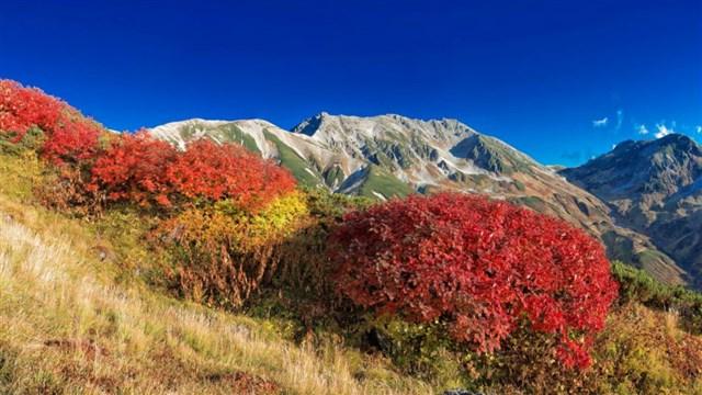 大雪山(黒岳),紅葉,名所,見頃,見ごろ,時期,人気,ランキング,駐車場,混雑